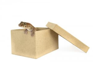 Moving House With Reptiles